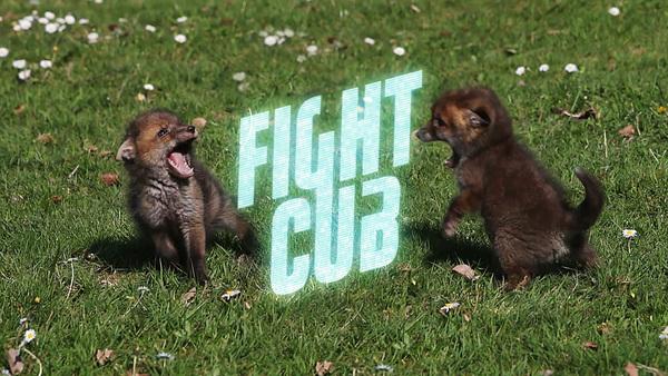 Fight Cub